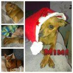 Mimi_big